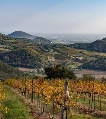 Il moscato giallo Maeli - Degustazione vini colli euganei
