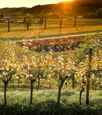 Venica&Venica - Degustazione vini del collio