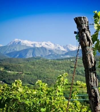 venica and venica: the collio wine