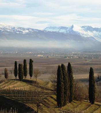 Castello di Buttrio - Degustazione vini Friuli Venezia Giulia